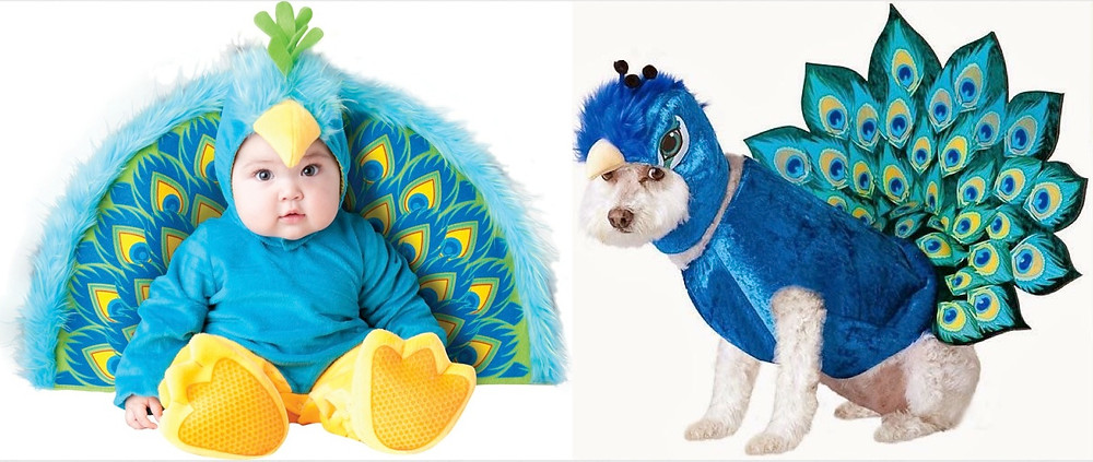 peacock baby and dog