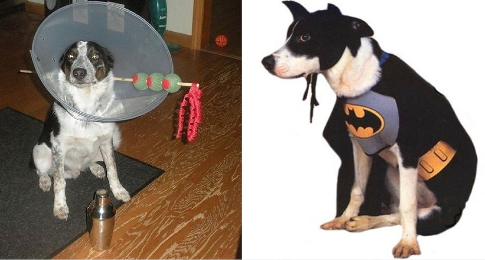 dog martini batman