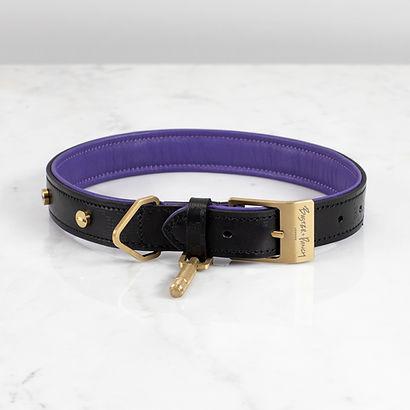 1. Dog_Collar_Brass_Medium_Front.jpg
