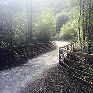 forest-paths-swow.jpg