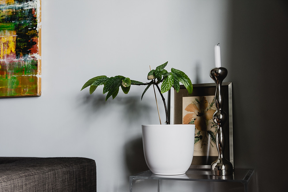 salon olivier francheteau