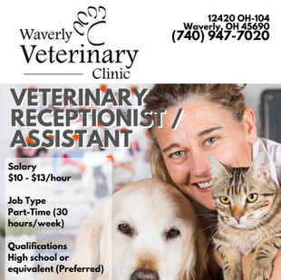 Vet Receptionist/Assistant