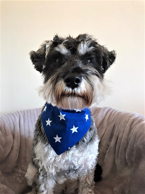 Dog Bandana Personalized Big Blue Star by Woof Stuff Dublin Ireland