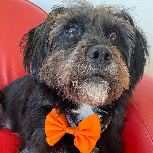 Dog Dickie Bow Halloween Spooky Orange  by Woof Stuff Dublin Ireland