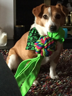 St Patricks Day Doggy and toy