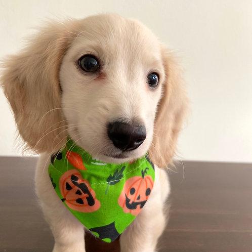 Dog Bandana Halloween Green with  Pumpkins and Skulls by Woof Stuff Dub