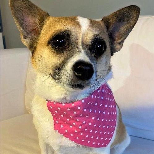 Dog Bandana Sweet Pink Polka Dot by Woof Stuff Dublin Ireland