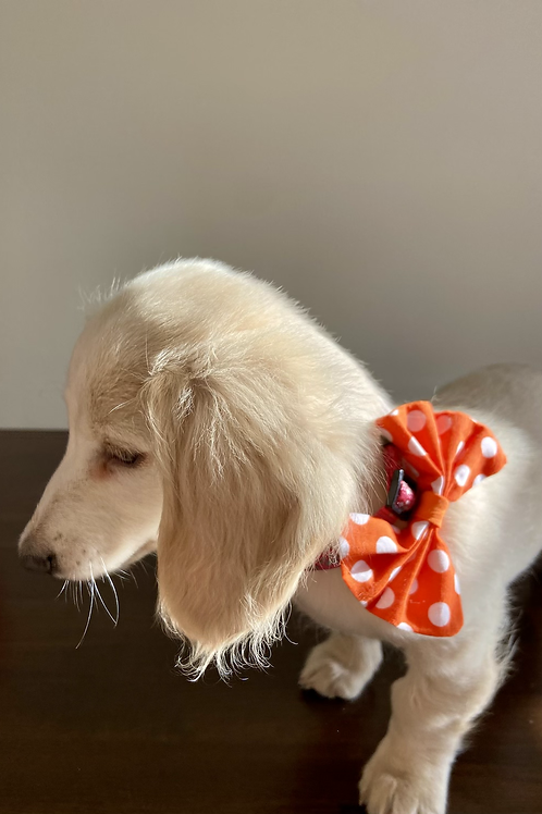 Dog Dickie Bow Dotty for Orange by Woof Stuff Dublin Ireland