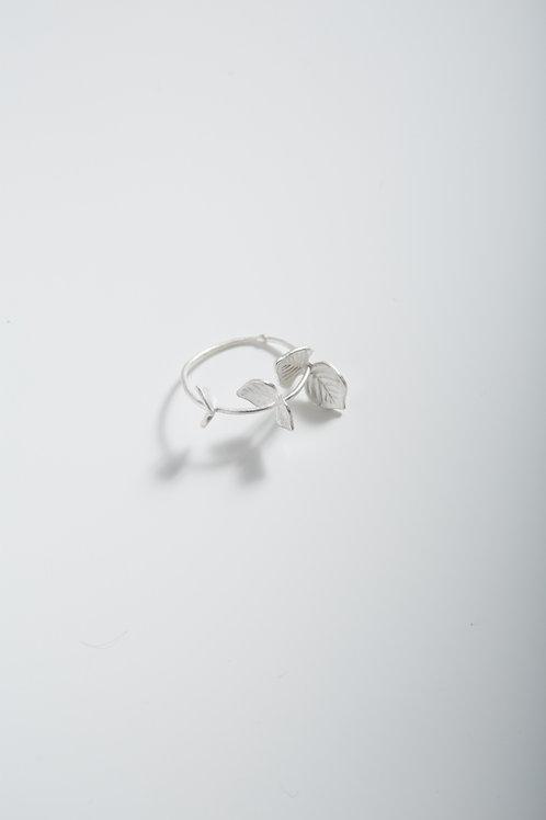 尤加利戒指