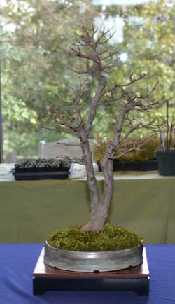 Trident split trunk cr