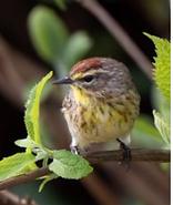 NC Aboretum bird 4-2021.png