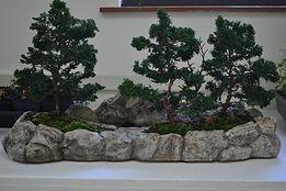 DSC_0561 hinoki forest.jpg