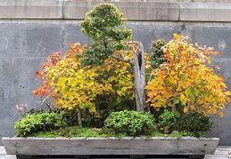 Bonsai forest in fall, Asheville