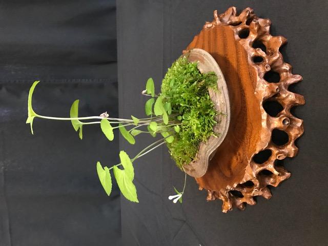 Kusamono (Companion plant)