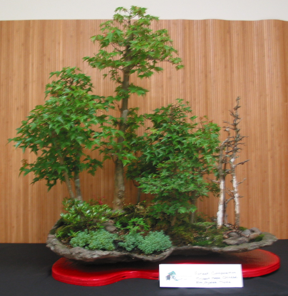 Forest: Tridents, Chinese Elm, Azale
