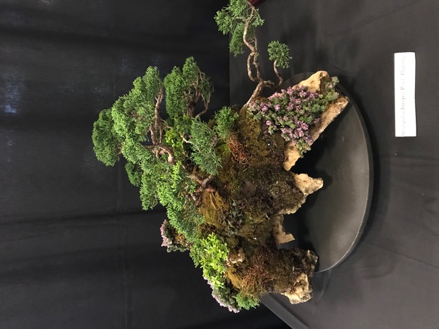 Juniper Forest on a slab