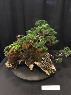 Juniper Forest on a slab