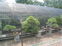Hoop house from outside