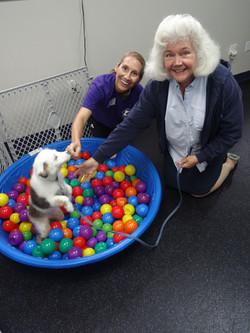 Puppy Ball Pool
