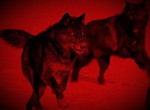 black-wolf-pack-running_edited_edited_ed