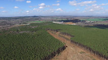 Pine Plantation Clear Cut Aerial View