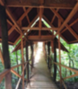 Bridge_1000.jpg