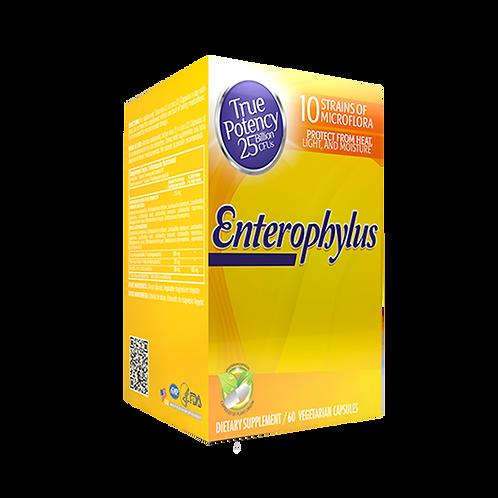 Enterophylus *60