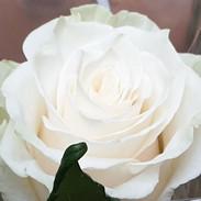 allestimenti con rose bianche
