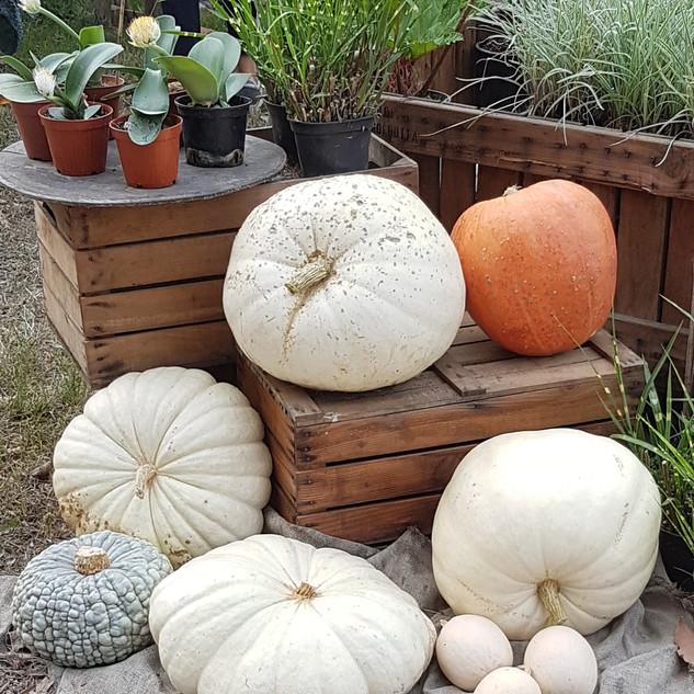 allestimenti festa tema halloween