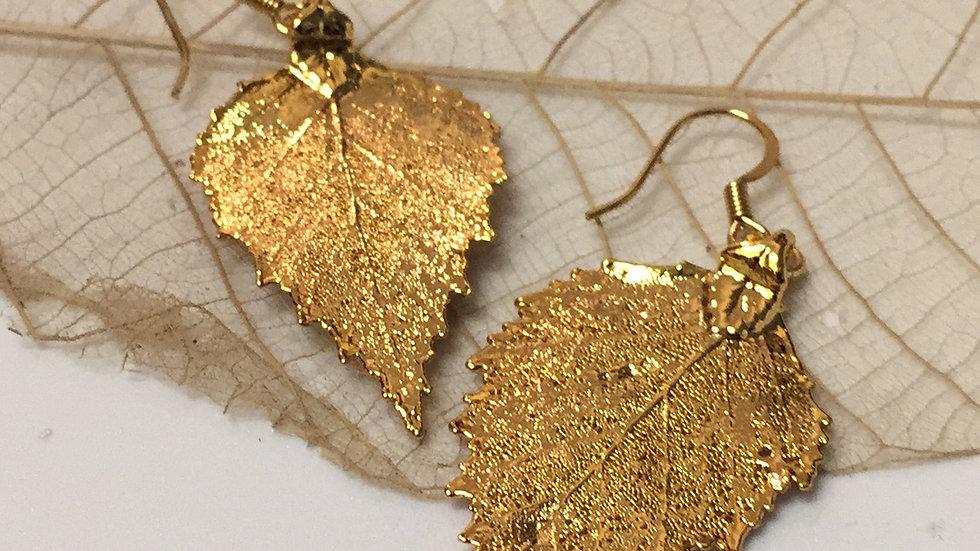 Forever Leaves 'BIRCH' earrings. GOLD A244