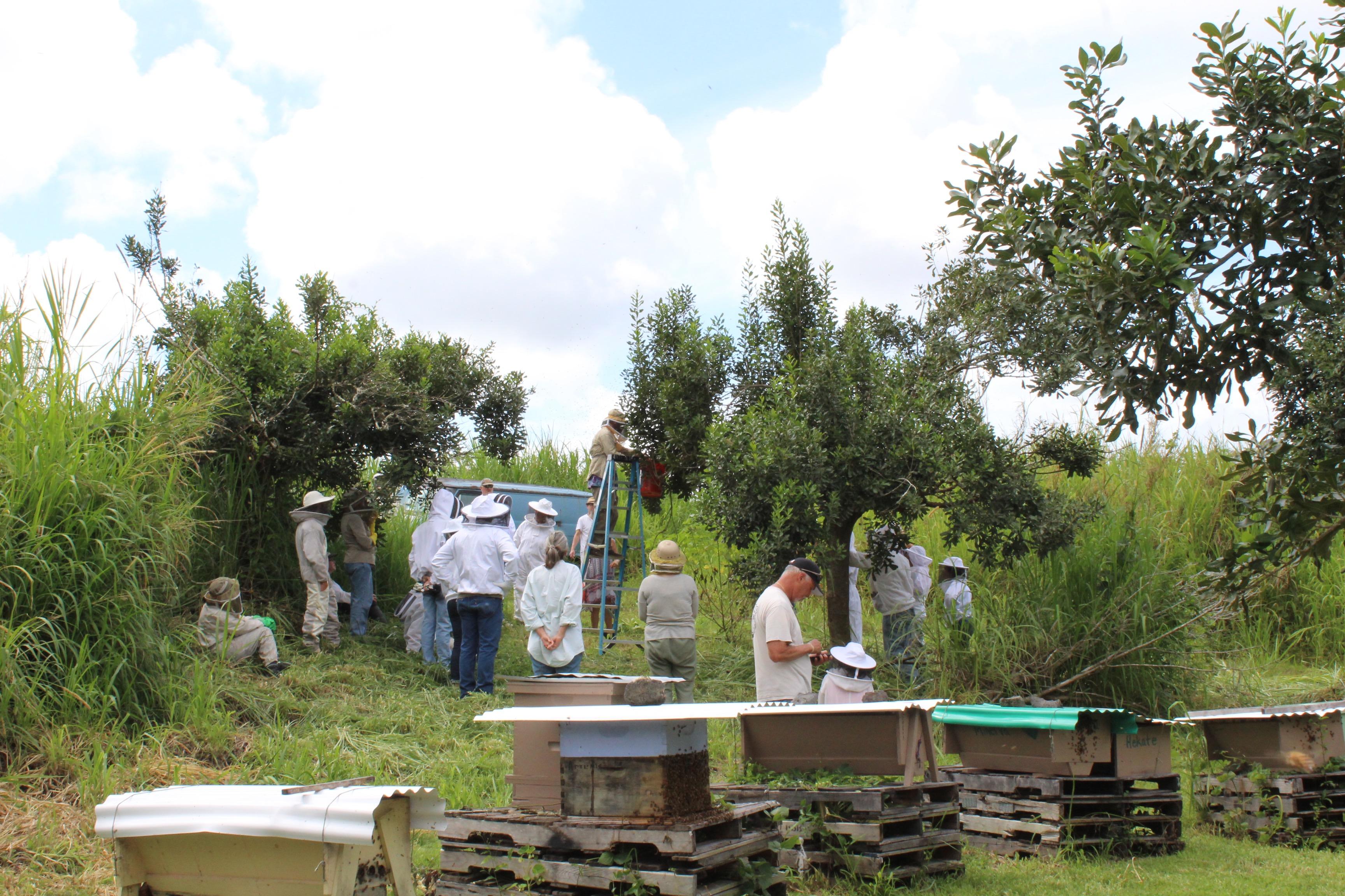 Swarm Catching ~ Workshop
