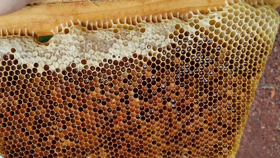Pollen ~ Bee Bread