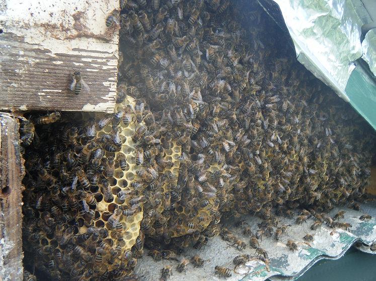 bees 073.JPG