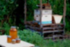 home-apiary-sm_edited.jpg