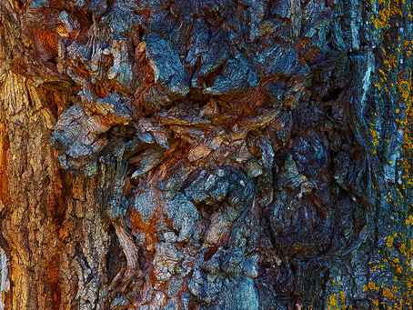 Spectacular Trunk Photographed by Local Alberta MP