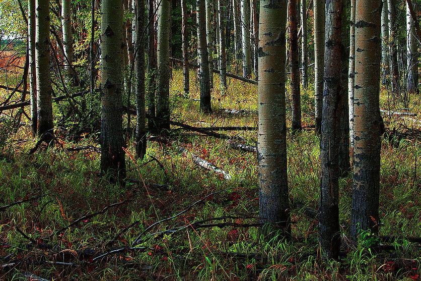IMG_9075 Yellowhead Sask 1920 x 1280 300