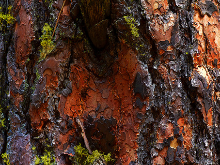 Spectacular trunk images from BC and Sask