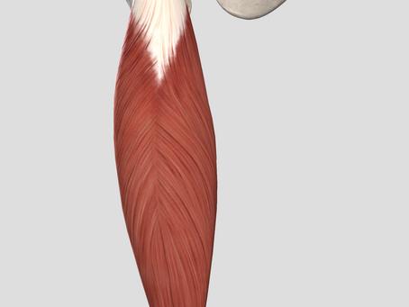 Urazy mięśnia prostego uda