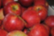 Pomme ELstar Direct Producteur Bonnes 86
