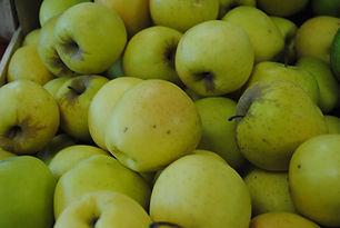 Pomme Golden Les jardins de la Frolle