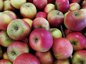 Pomme reine des reinettes .jpg