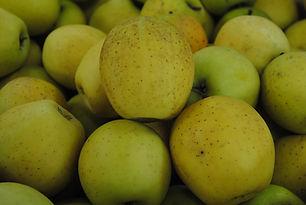 Pomme Goldrush Les Jardins de la Frolle