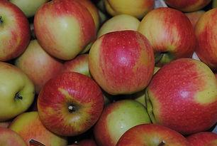 pomme Pinova Bonnes Les Jardins de la Frolle cueillette bonnes