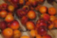 Abricot barq les jardins de la Frolle