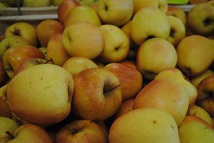 Pomme Golden Leratess Les jardins de la