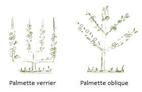 Formes d arbres2.png