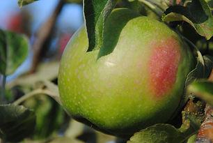 Pomme Granny Smith Les Jardins de la Frolle