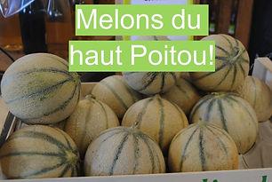 Melons haut Poitou direct producteur Bonnes Frolle