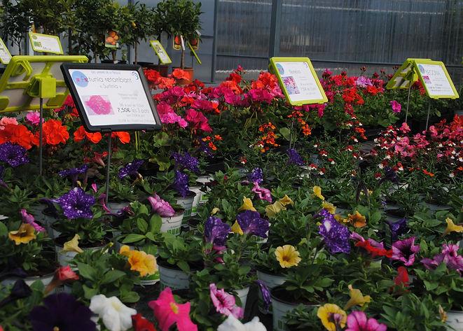 plantes pour jardinière les jardins de l