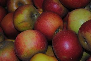 Pomme reine des reinettes bonnes cueillette jardin de la frolle